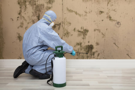 removing mold in home