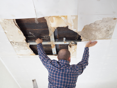 landlord assessing damage in home